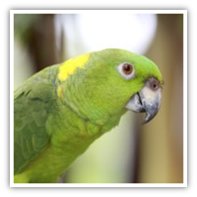 Diseases from pet birds to humans