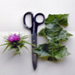 milk thistle comparison - click for larger image