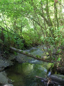 Photo showing Miller Creek in Normandy Park in September 2007