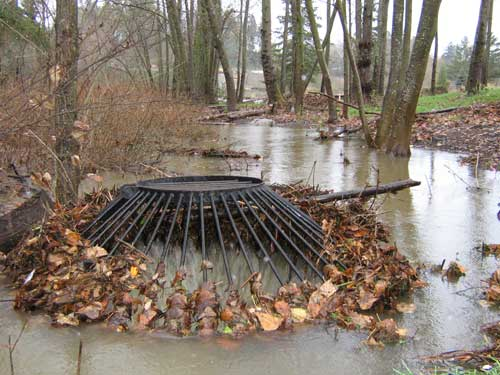 "Photo of stormwater backed up around a ""bird cage"" stormwater grate"