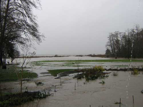 Picture of flooded field with Puget Sound in the background