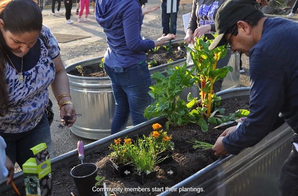 Community members start their plantings