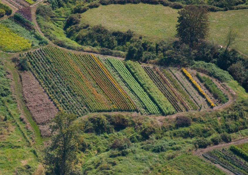 Steering development away from farms and forests