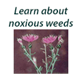 Learn about noxious weeds
