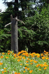 The only above ground structure in Boeing Creek Park is an odor control stack disguised as a tree snag.