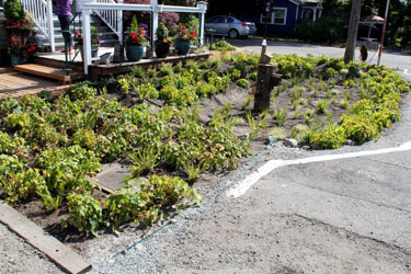 New rain garden at the corner of 12th Avenue South and South Southern Street in South Park