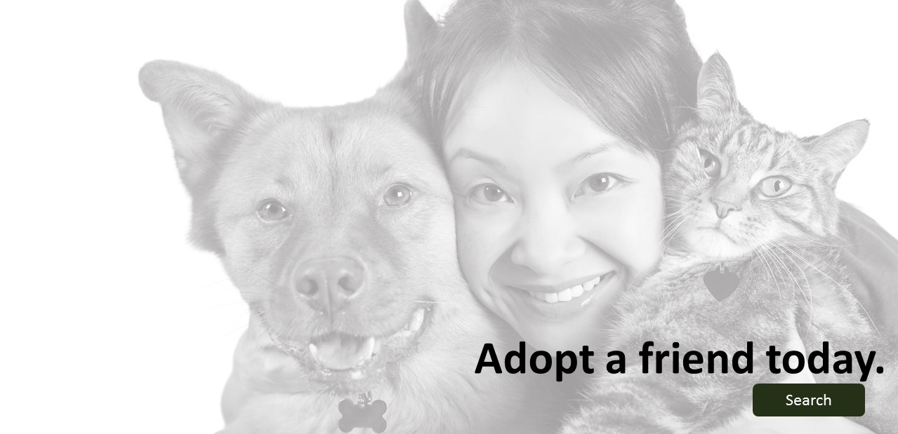Adopt-a-friend-banner-ENG