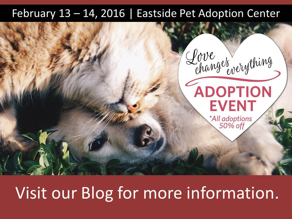 PetAdoption_LoveChangesEverything_Feb2016