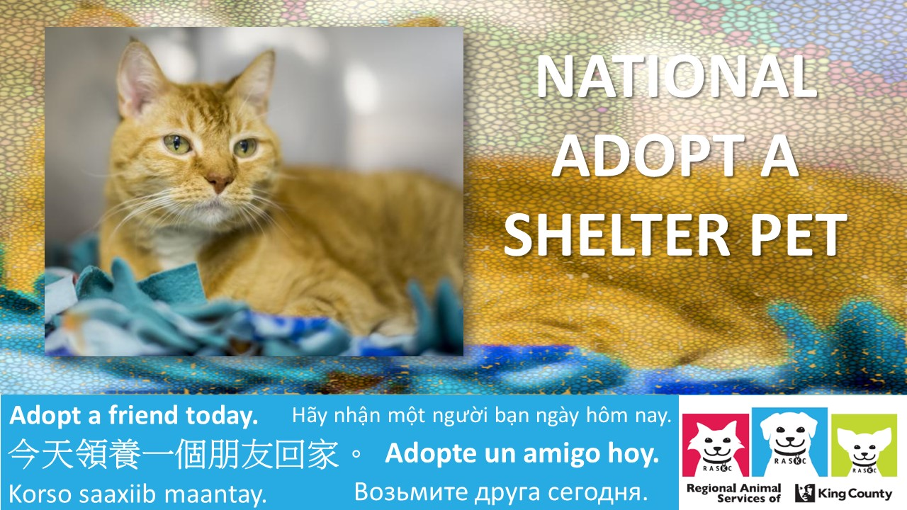 National-shelter-day-banner