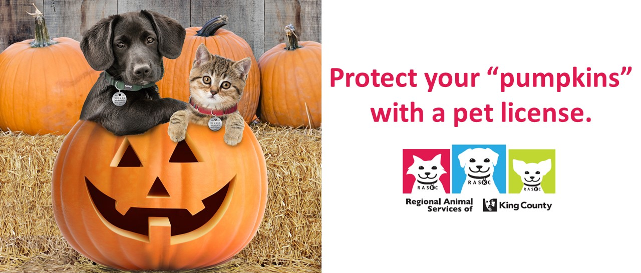 Protect-your-pumpkins-banner