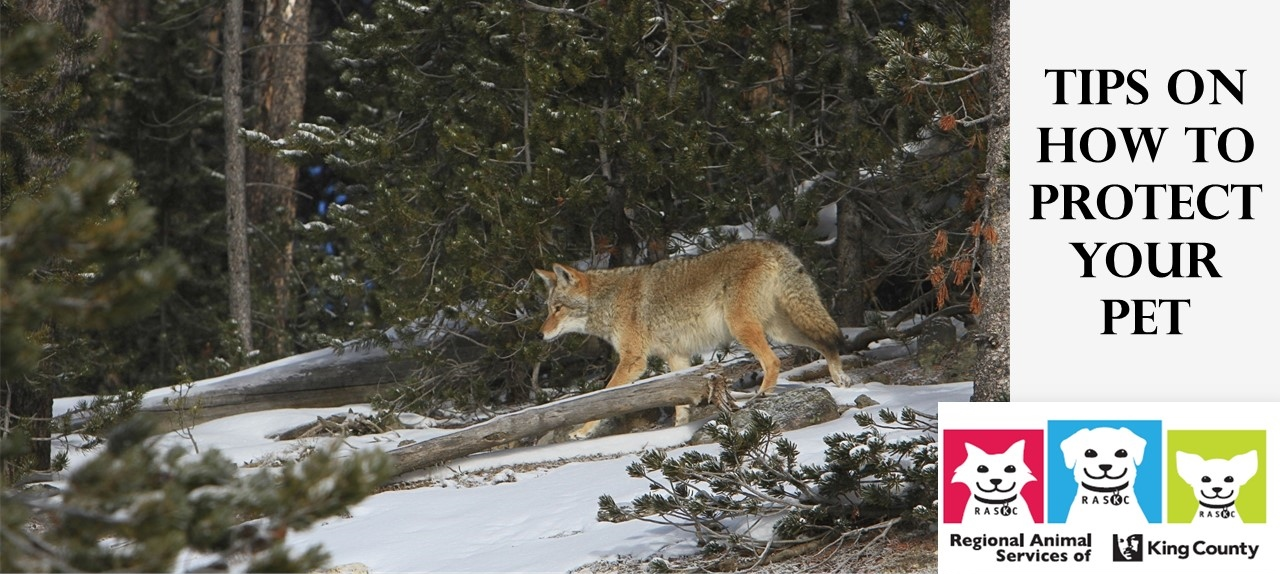 protect-your-pet-coyotes