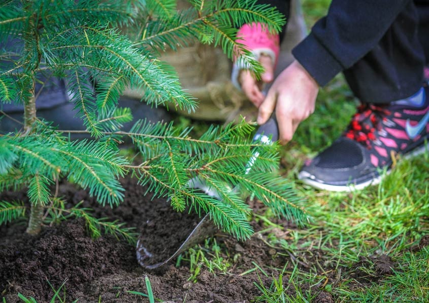 King County pledged to plant one million trees by 2020.