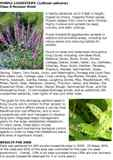 2008_Purple_Loosestrife_in_King_County_Page_1