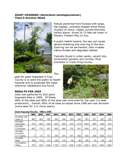 2009_Giant_Hogweed_in_King_County_Page_1 - click to download