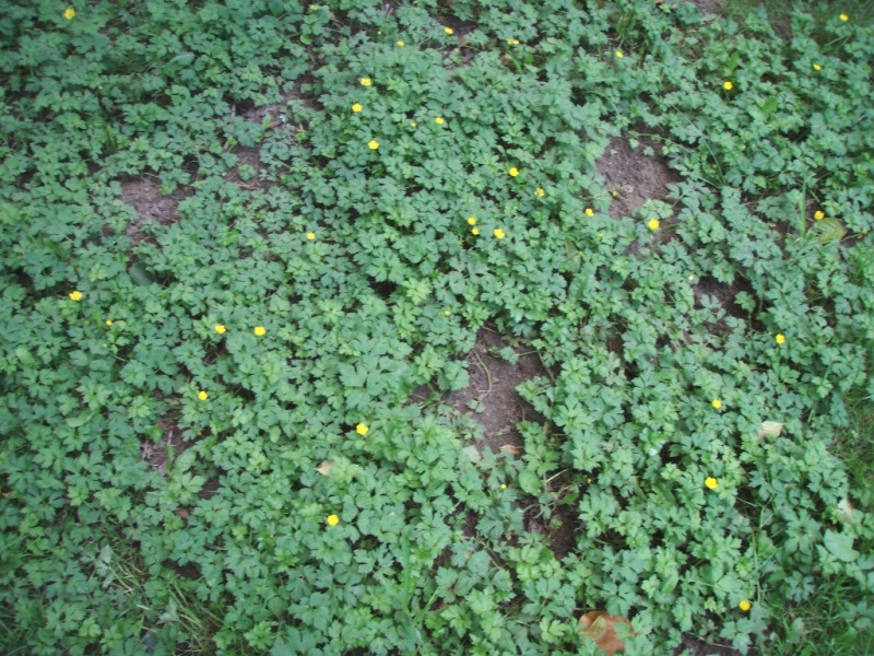 Is Crossbow Herbicide Legal In Washington State
