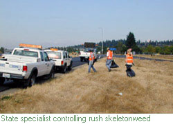 State weed specialist working with WSDOT crews