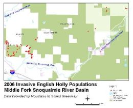 Map of English holly populations in Middle Fork Snoqualmie - Click for larger image