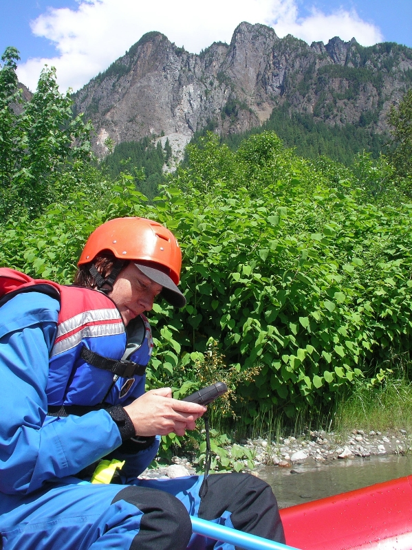 Middle Fork Snoqualmie knotweed mapping