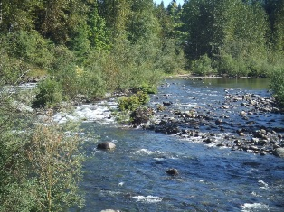 Middle Fork Snoqualmie River - click for information on knotweed control project