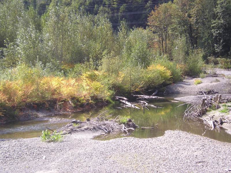 Skykomish_MP53_After_treatment_closeup_2005