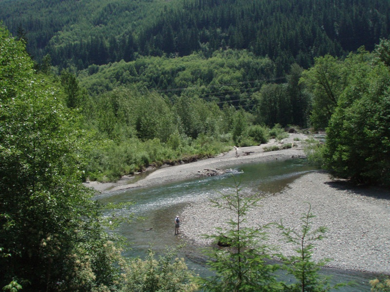 Skykomish_MP53_successful_control_and_natural_revegation_July2007