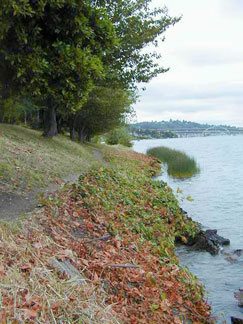 Lake Washington shoreline