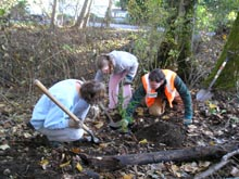 Photo showing volunteers planting trees on Miller Creek in Burien in October 2007