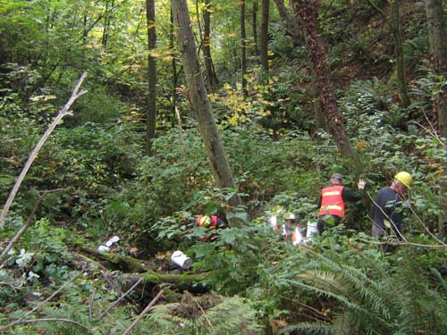 Photo showing people collecting litter in a wooded ravine