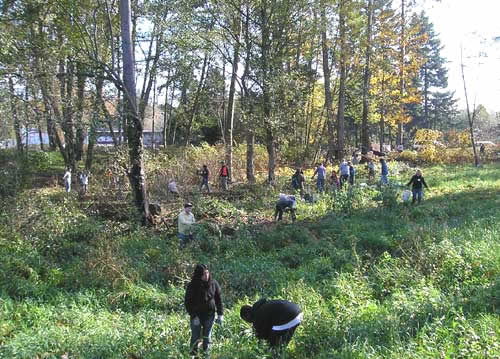 Photo of Miller Creek at S. 144th Way where volunteers are revegetating the stream
