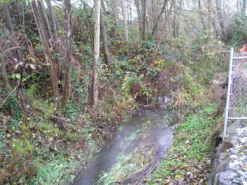 Photo of Miller Creek east of SR509 showing mix of native and non-native trees and shrubs
