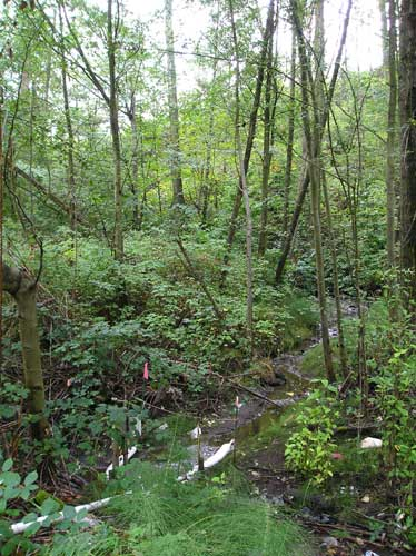 Photo of Miller Creek tributary east of Lake Reba, showing pollution-absorbing boom