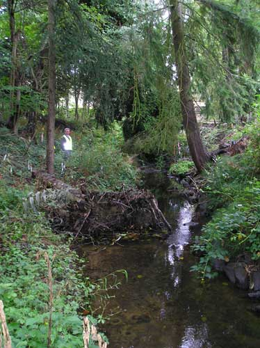 Photo of mature and newly-planted trees along Miller Creek on Port of Seattle property
