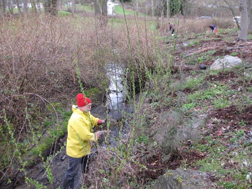 Photo of man standing in stream and weeding the stream bank