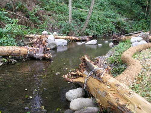 Photo of tree trunks cabled in place in Miller Creek