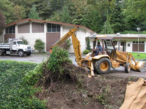 Photo of backhoe removing ivy from stream bank