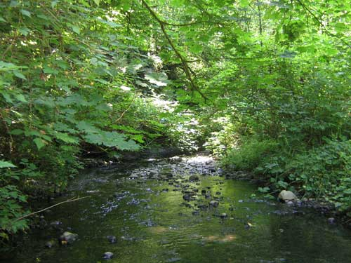 Photo of stream with native shrubs overhanging channel