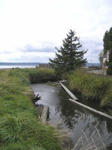 Photo of Miller Creek near its mouth on Puget Sound