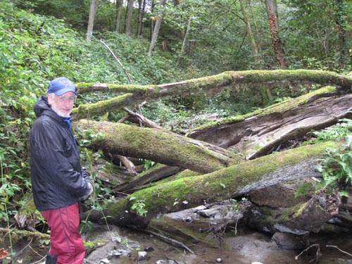 Photo of man standing in front of log jam in stream in a forest