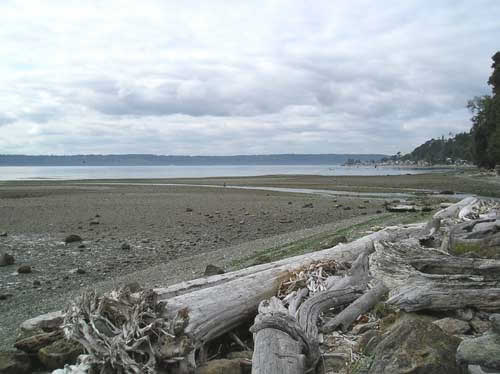 Photo of beach showing Miller Creek flowing across it at low tide