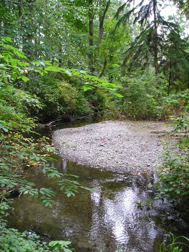 Photo of Miller Creek showing gravel bar and mature trees along streambanks