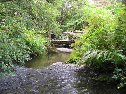 Photo of footbridge over Miller Creek