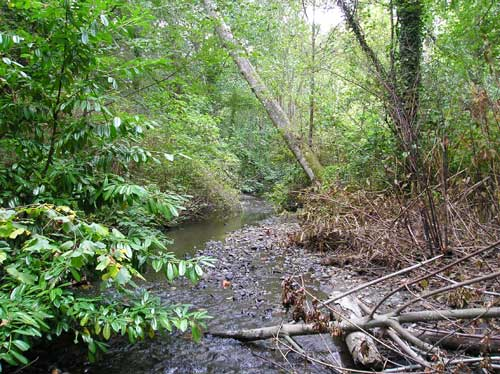 Photo of mixed native and non-native trees along Miller Creek