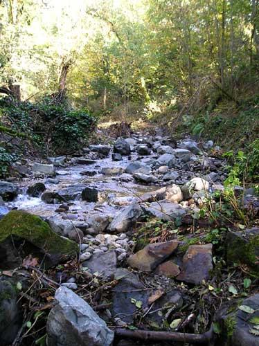 Miller Creek Photo Tour: Follow the Stream through Burien, SeaTac, and