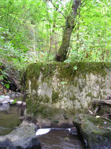 Photo of Miller Creek showing concrete block in stream with tree growing on top
