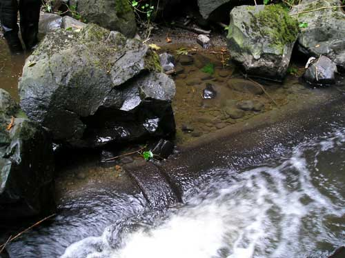 Photo showing exposed sewer pipe in Miller Creek
