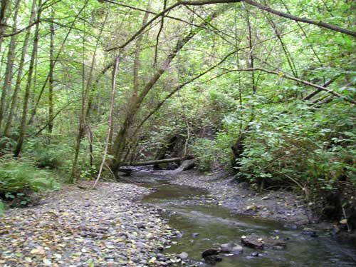 Photo of Miller Creek in Normandy Park showing trees shading gravel-lined stream