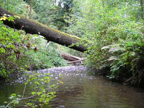 Photo of Miller Creek