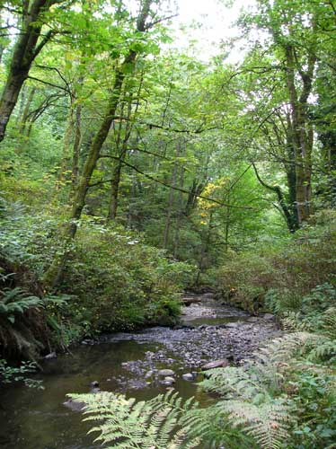 Photo of Miller Creek showing trees and gravel
