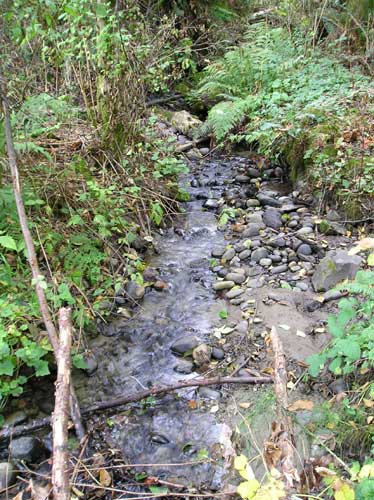 Photo showing tributary stream to Miller Creek