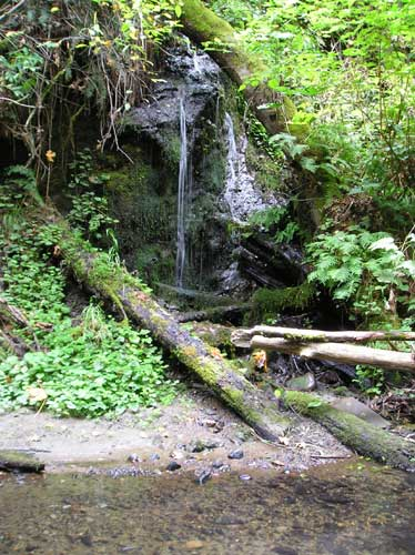 Photo of small waterfall tributary to Miller Creek